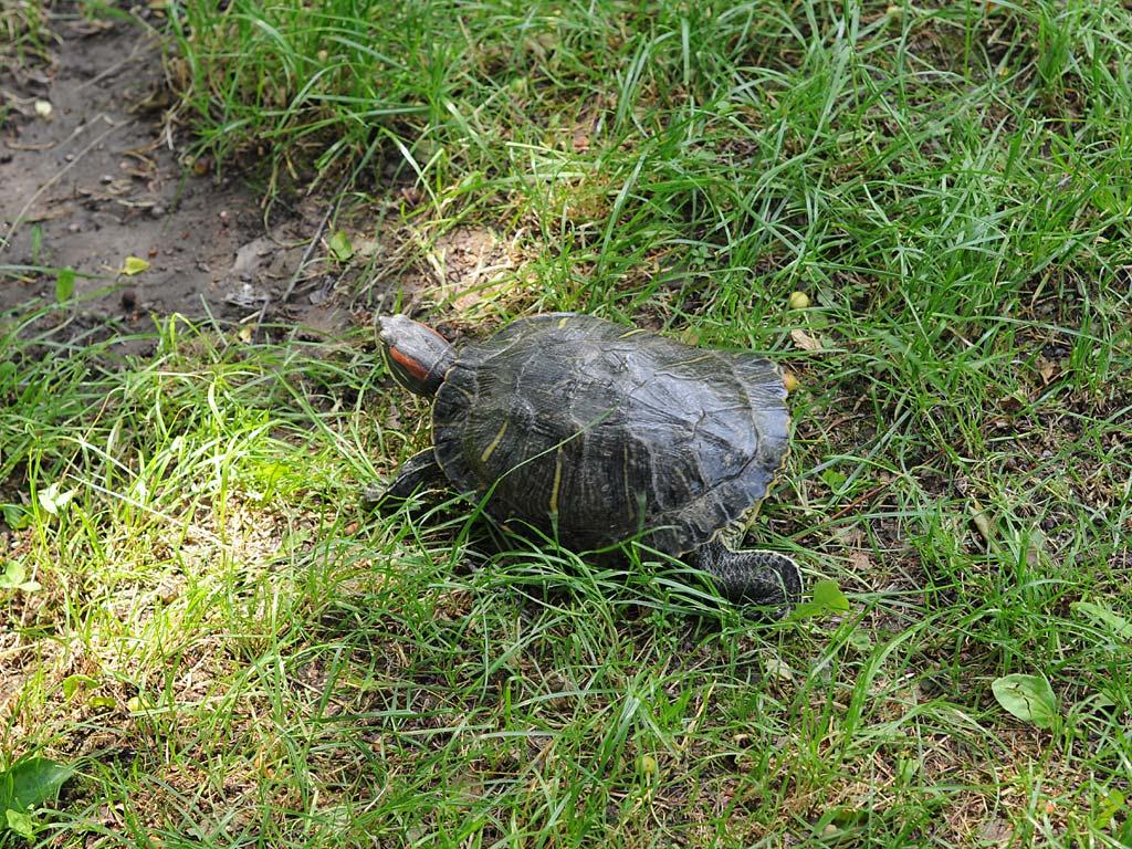 Turtle05.jpg